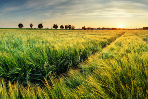На Гощанщині покращився стан сільського господарства