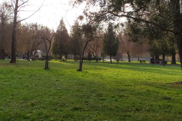 Грудень у Рівному: квіти, гриби та зелені газони (Фото)