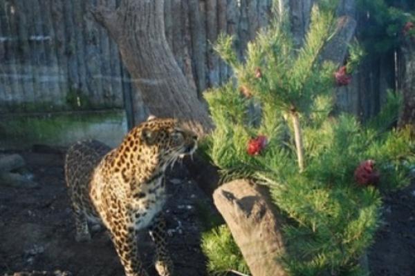 М'ясну ялинку отримали звірята Рівненського зоопарку (Фото)