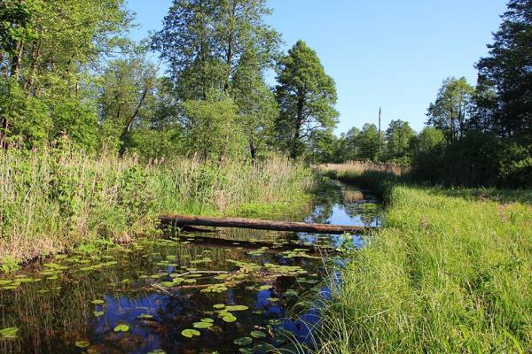Сарненщина стала частиною біосферного резервату «Прип'ятське Полісся»