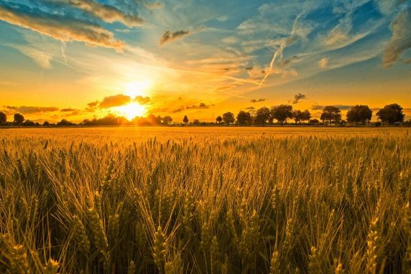 Місцеві ради Рівненщини щорічно отримуватимуть близько 3 млн гривень завдяки земельним торгам