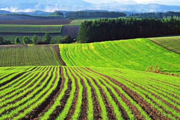 У Рівненській області зросла середня вартість земель
