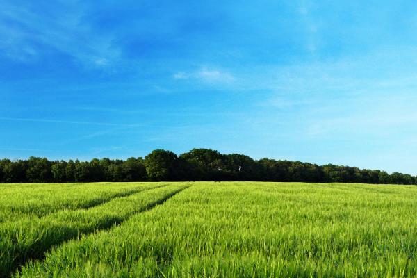 Середня вартість земель Рівненщини стала вищою