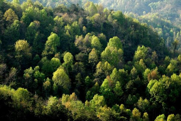 Інвентаризація лісів відбудеться на Рівненщині