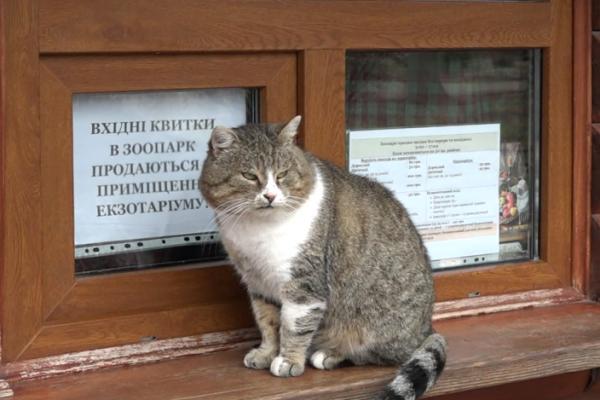 У Рівненському зоопарку оголосили конкурс до Дня котячих (відео)