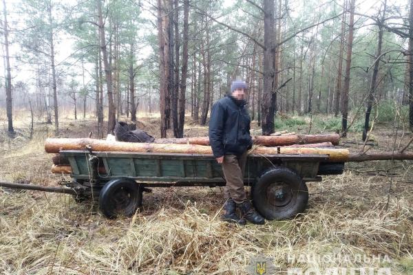 Житель Рокитнівщини постане перед судом за вирубку лісу