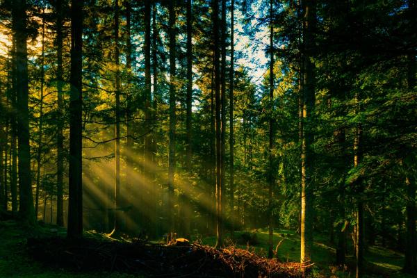 В Україні призупили акцію «Відновлюємо ліси разом»