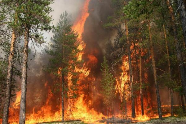 На Рівненщині заборонено відвідувати ліси