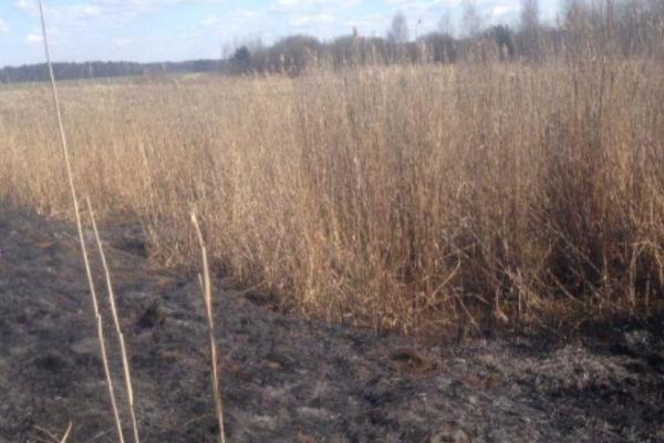 На Сарненщині спіймали палія сухої трави