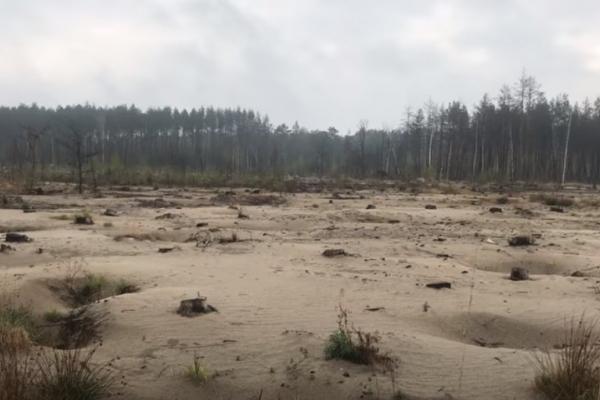 Урочище Гальбин на Рівненщині через бурштин перетворили у пустелю (ВІДЕО)