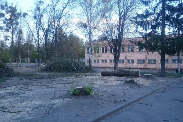 У Рівному на місці десятка дерев збудують футбольне мініполе