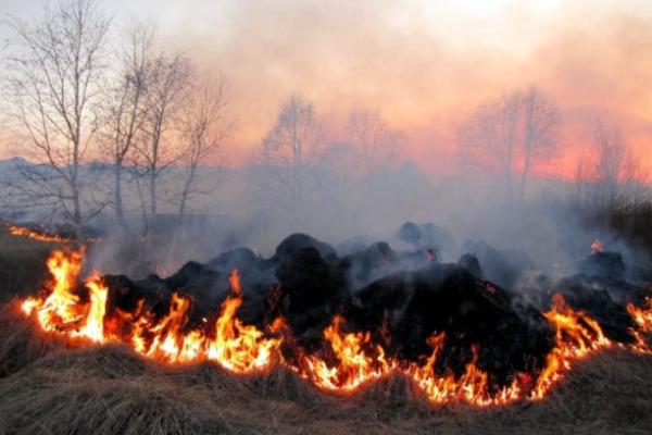 Підлеглих Авакова засікли за умисним підпалом трави під Києвом (фото)