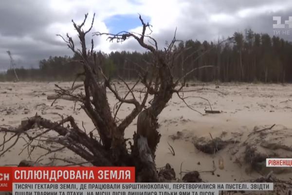 Рівненщина: на Поліссі утворилася пустеля на тисячах гектарів (ВІДЕО)