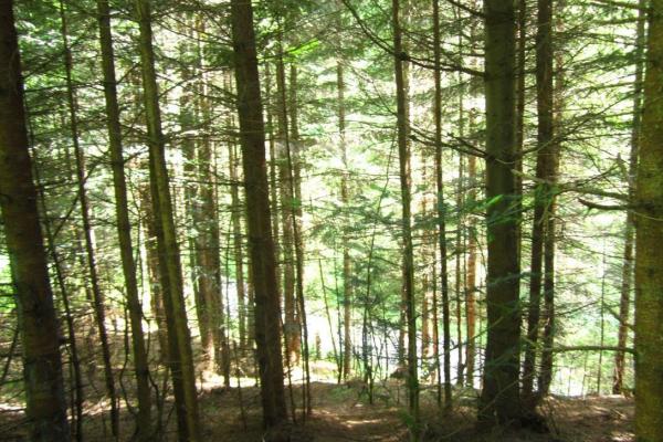 У Рівненській області проведуть національну інвентаризацію лісів