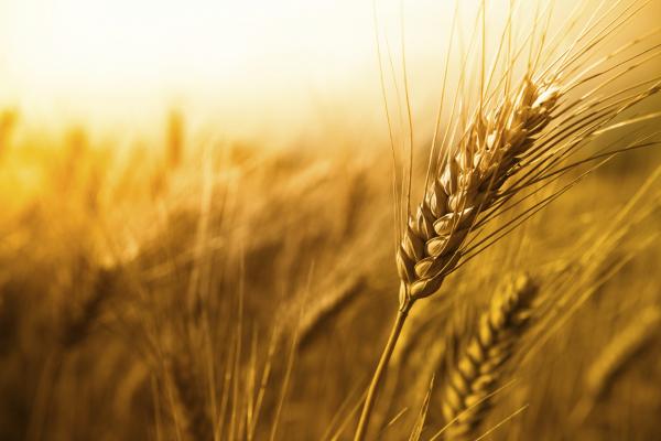 Рівненським аграріям запропонували понад десять напрямків державної підтримки