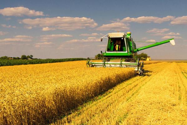 На Рівненщині розпочали збирати врожай