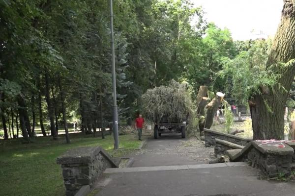 У центральному парку Рівного зрізають дерева (ВІДЕО)