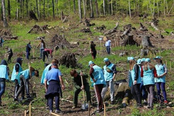 «Колись дрова будуть за ціною газу»: керівництво Рівненщини прокоментувало масову вирубку лісу