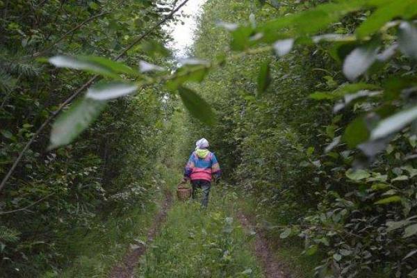 На Рівненщині бабця пішла у ліс за грибами і зникла