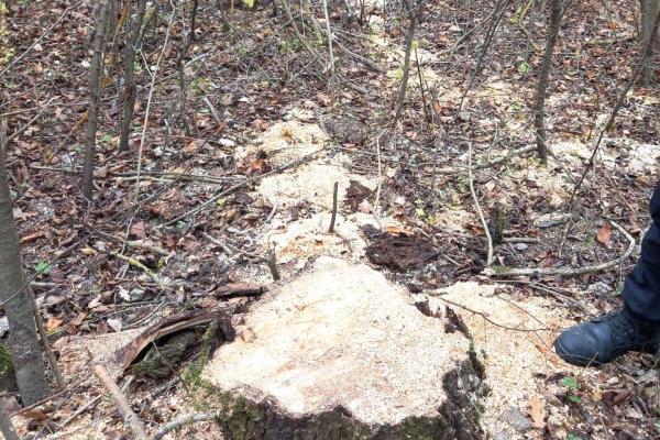 Неподалік Корнина місцевий житель займався незаконною вирубкою деревини