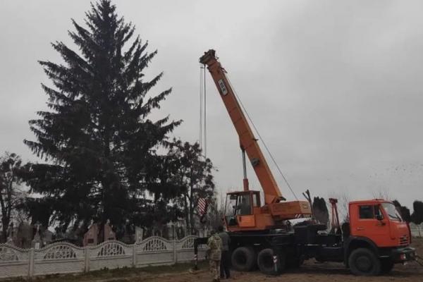Ялинку з кладовища встановлять у центрі міста Дубно