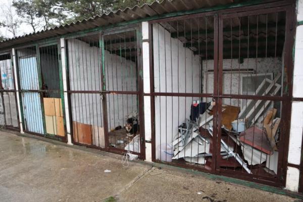 У Вараші намагаються знайти місце, де створять притулок для бездомних тварин