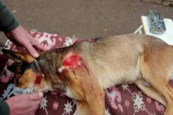 У Клевані п'яні молодики розстріляли собак (ФОТО)