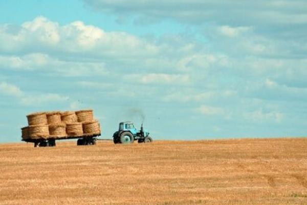 Стало відомо, скільки коштуватиме гектар землі на Рівненщині після запуску ринку