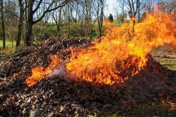 За знищення рослинного світу жителі Рівненщини відповідатимуть перед законом