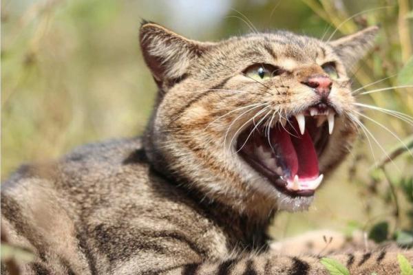 На Острожчині скажений кіт вкусив дитину