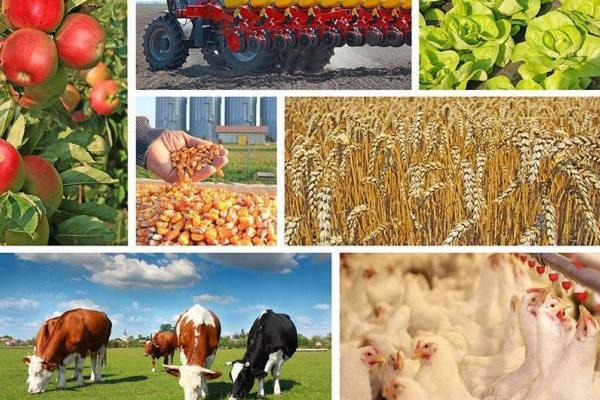Аграріям Рівненщини у 2021 році пропонують 6 нових програм державної підтримки