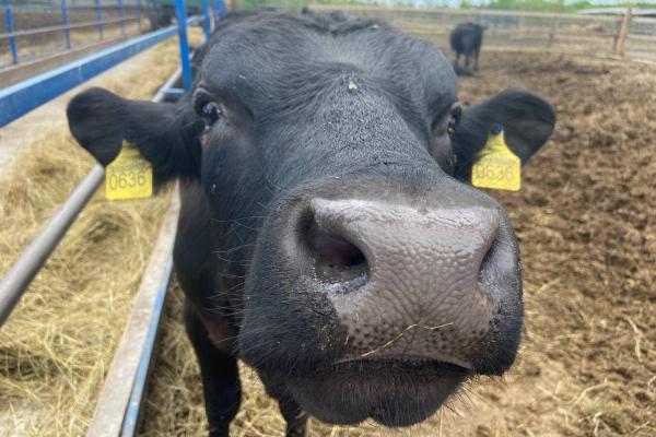Пів мільйона гривень отримало фермерське господарство на Рівненщині
