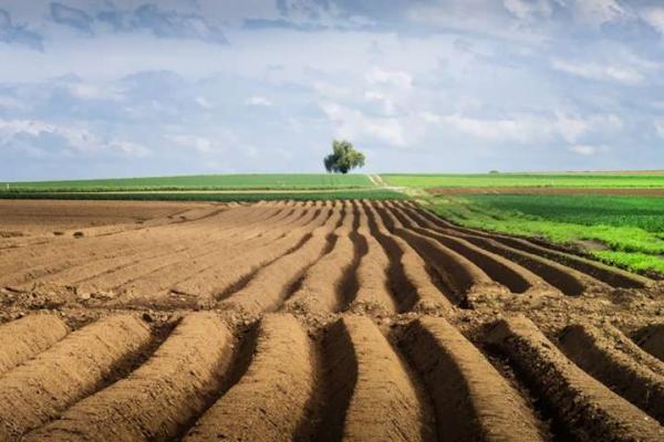 В Україні підписали закон щодо системи управління та дерегуляції у сфері земельних відносин