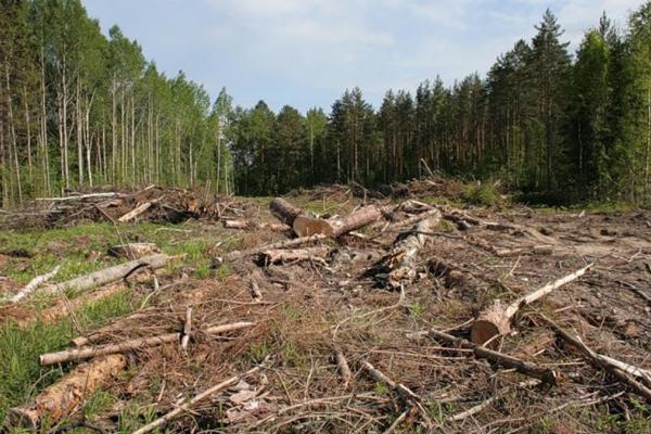 Чергова перевірка двох лісгоспів на Рівненщині виявила порушень на чверть мільйона гривень