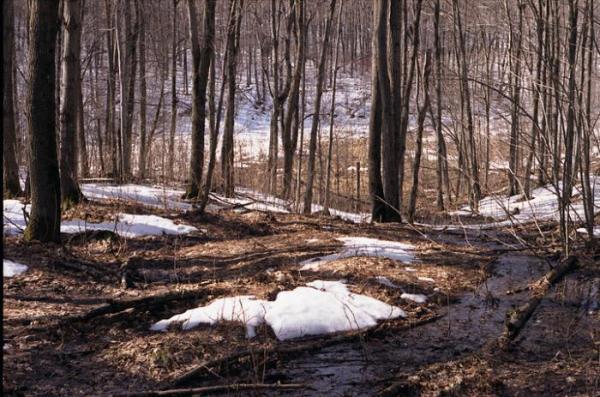 Sinoptik: Погода в Рівному та Рівненській області на середу, 6 лютого