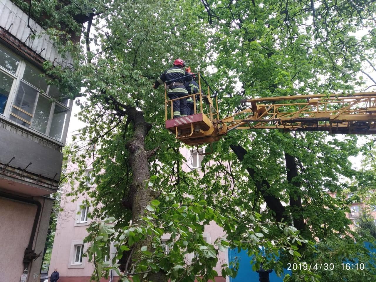 Рівненські рятувальники надали допомогу по зрізанню дерева