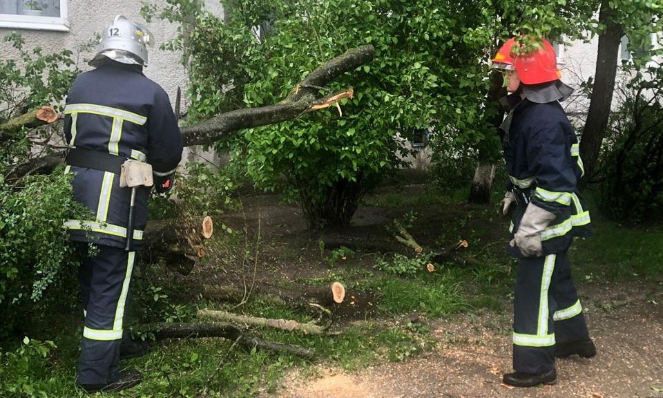 Рятувальники Вараша звільнили проїжджу частину від поваленого дерева