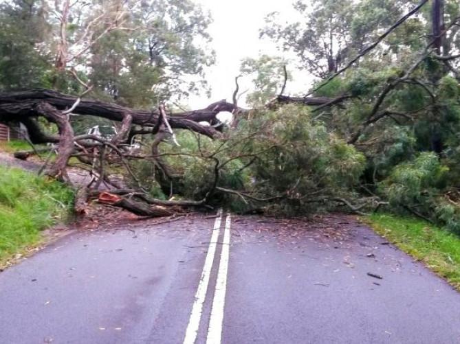 У Острозі на центральну вулицю впало дерево