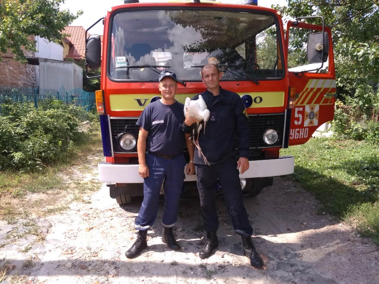 Дубенські рятувальники повернули до гнізда дитинча лелеки