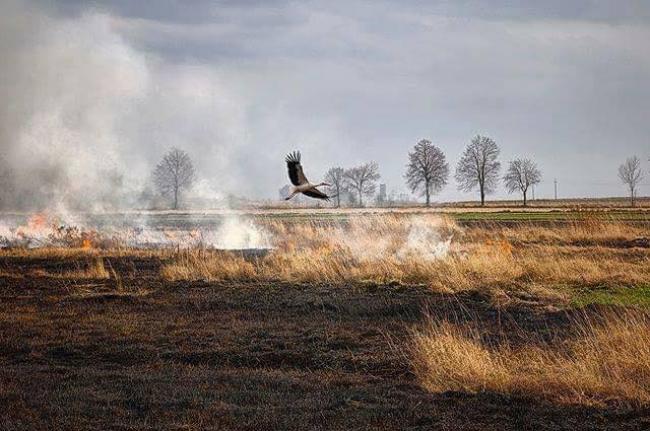Рівненська служба порятунку закликає громадян не провокувати пожежі у природних екосистемах!