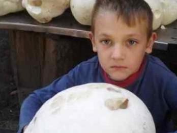 На Острожчині знайшли велетенського гриба